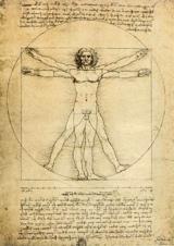 illustration du nombre d'or dans l'anatomie de l'homme par Léonard de Vinci
